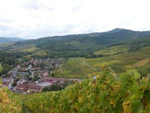 A Ingersheim, en Alsace, près de Colmar